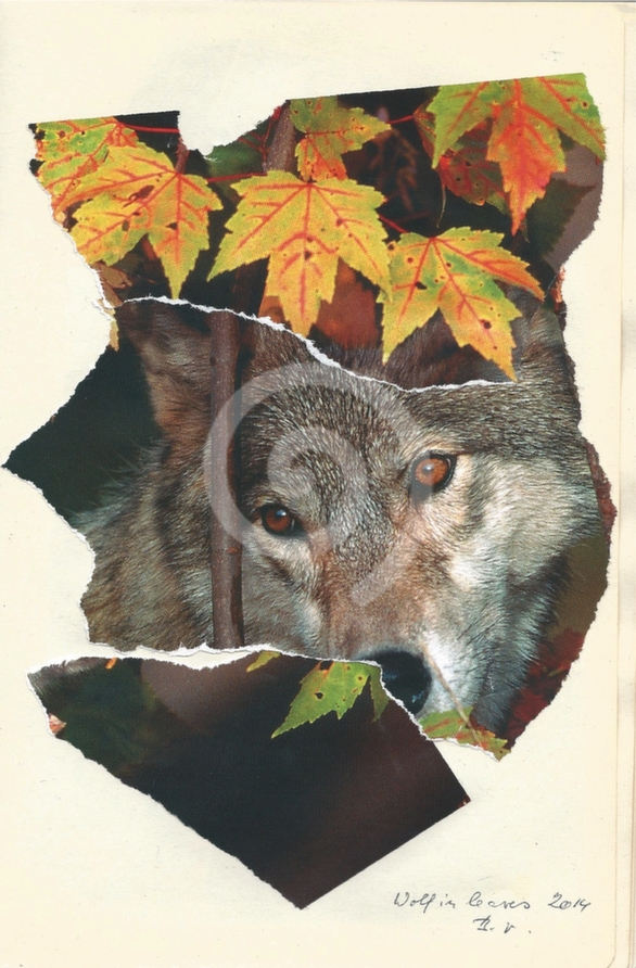 Wolf in leaves/Vlk v listí (2014)
